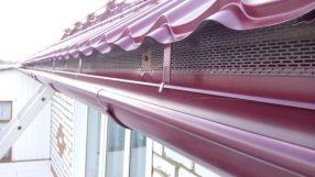 Как вывести летучих мышей с чердака дома