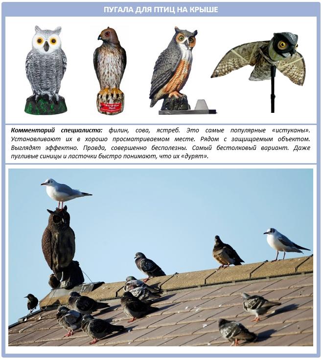 Как выгнать птиц из крыши при помощи пугал