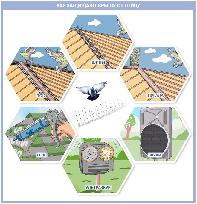 Как прогнать птиц из крыши дома