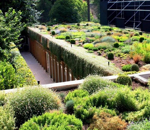 Зеленая крыша из суккулентов и других не требующих ухода растений